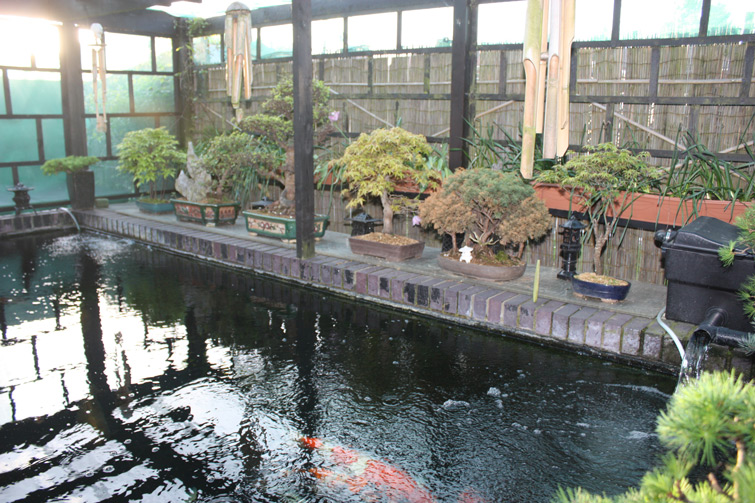 Ponds for Koi pond builders yorkshire